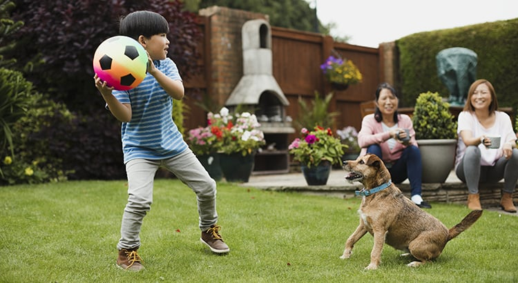 Little boy is playing fetch in the garden with his pet dog and a ball. His mother and grandmother are watching with a cup of tea.