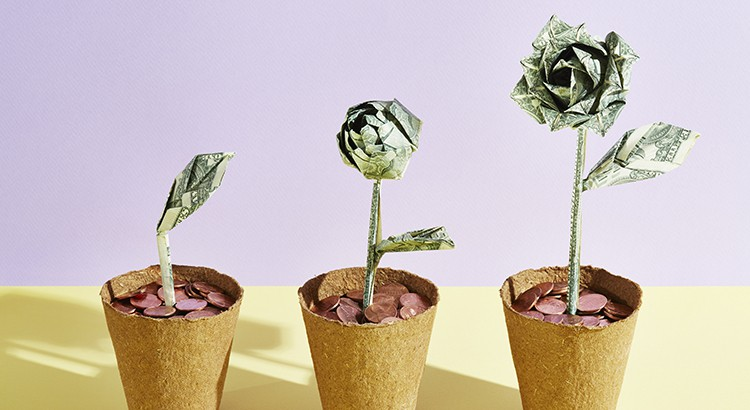 The money plant grows bigger